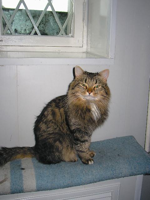 Этот кот первым встречает паломников