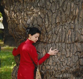 Вековые дубы