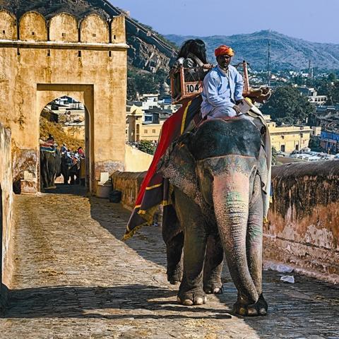Знаменитые индийские слоны по сей день служат людям