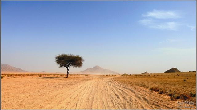 Каждого христианина, ступившего на землю  Галилеи, охватывает невероятное и неопровер- жимое ощущение реальности произошедших здесь евангельских событий