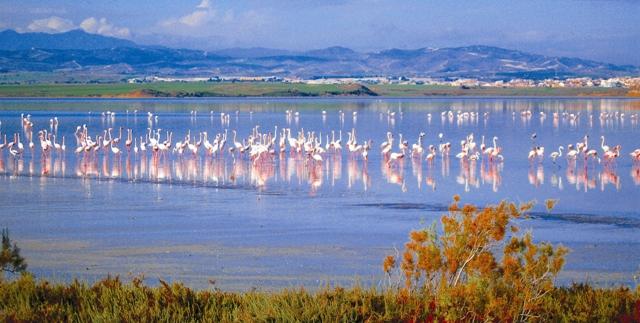 Недалеко от аэропорта Ларнаки есть соляное озеро, где до конца XX века добывали соль. Туристы приезжают сюда два раза в год – в конце осени и в начале весны понаблюдать за розовыми фламинго, белыми цаплями и черными лебедями.