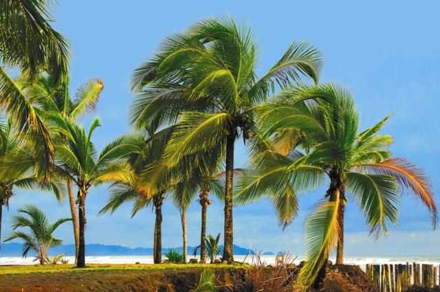 Многие путешественники, побывавшие в Коста-Рике, называют ее самой красивой страной в мире. И не без оснований. Эта небольшая страна омывается двумя океанами – Тихим и Атлантическим