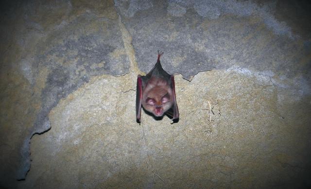 Летучие мыши - безобидные обитатели монастырских пещер