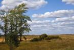 Куликово поле