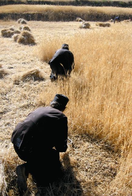 Насельники много трудятся, причем в этой обители почти не используется моторная техника, большая часть работ совершается вручную – это часть духовного подвига