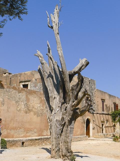 Кипарис напоминает о страшных событиях 1866 года