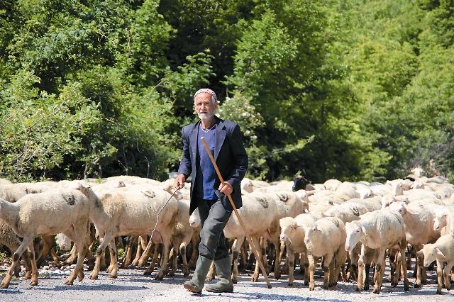 Албанский пастух