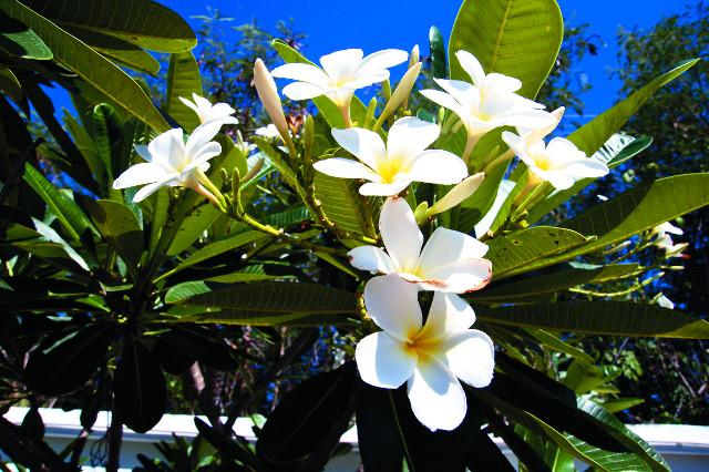 Таиланд - это царство цветов