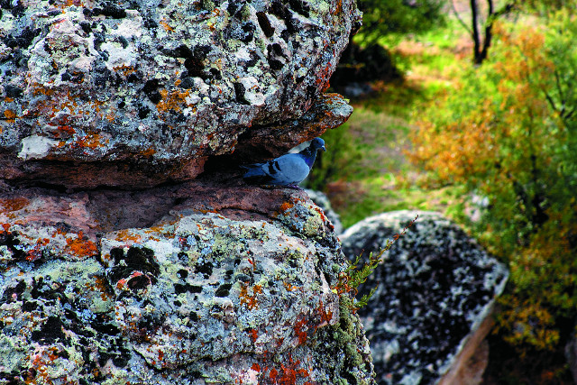 В некогда славной Листре  теперь живут голуби