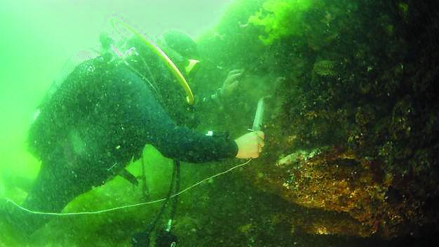 Команда турецких археологов планирует исследовать терри- торию одного из Принцевых островов, ушедшего под воду в ре- зультате сильного землетрясения в 1010 году