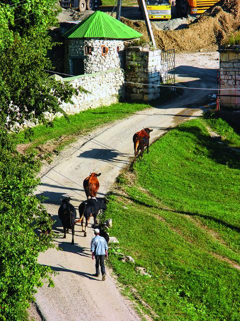 Монастырское стадо возвращается на скотный двор