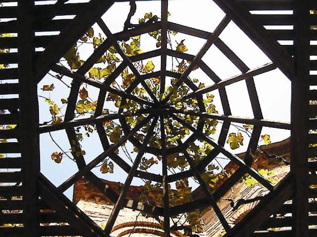 Виноградная лоза в монастыре Хиландар