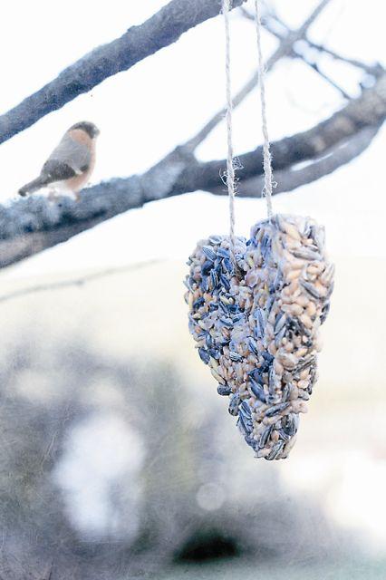 Добросердечные норвежцы также стремятся разделить рождественскую радость со всеми живыми существами и устраивают елки для птиц