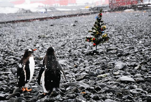 Рождество в Антарктиде