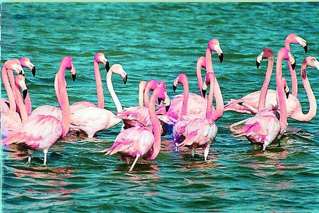 Обитают здесь и редкие виды птиц – фламинго, цапли, колибри
