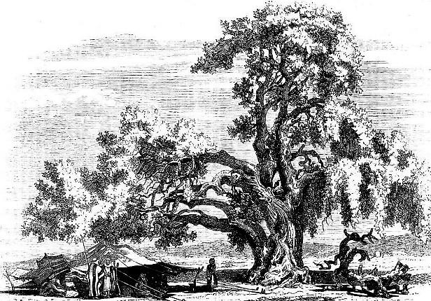 Древо Авраамово 1861 год