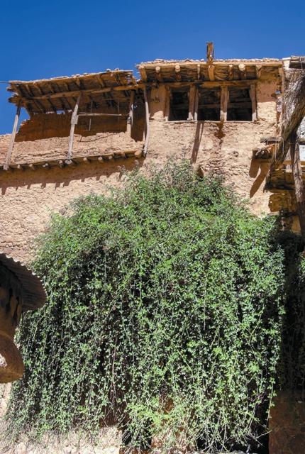 Неопалимая Купина в монастыре святой Екатерины